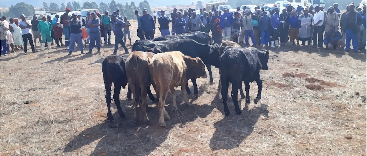 Organised crime moves in on South Africa's livestock industry - ISS Africa