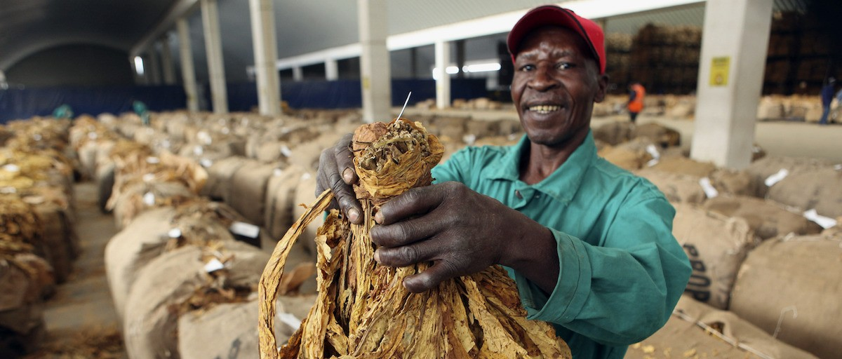 Could agriculture be Zimbabwe's way out of the dark? - ISS Africa